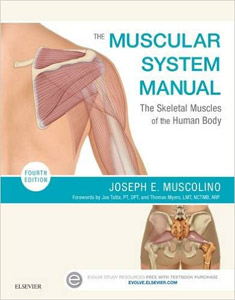The Muscular System Manual: The Skeletal Muscles of the Human Body,4/e
